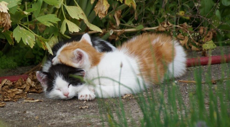 Katzen von Familie Strodel