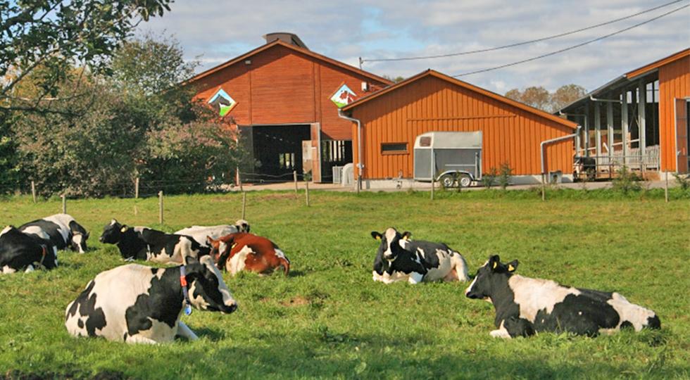 Kühe auf der Weide vor dem Bauernhof der Familie Mock