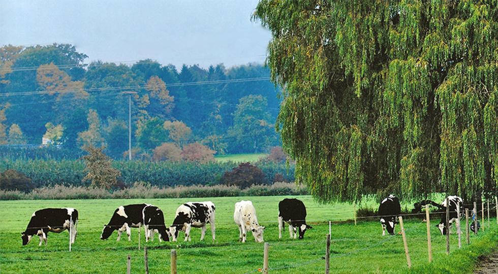 Kühe auf der Weide von Familie Mock