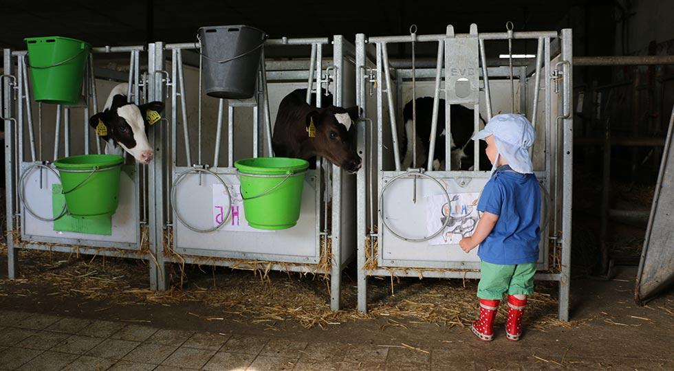Kind mit Kälbchen auf dem Bauernhof von Familie Schele